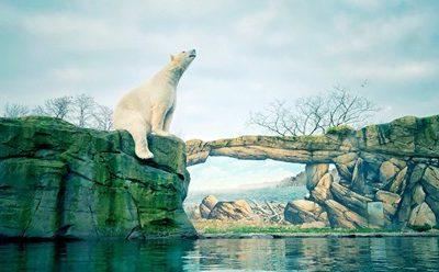Das System Zoo