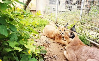 Projekttreffen im Wildkatzenzentrum